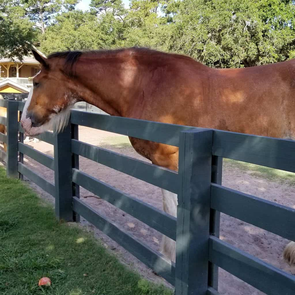 Horse at Lawton Stables, Sea Pines Resort