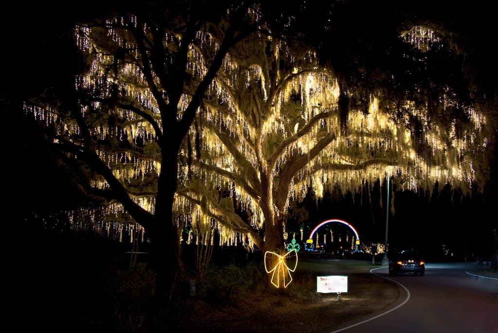 Charleston SC Festival of Lights Mossy Oak Tree Covered in Lights