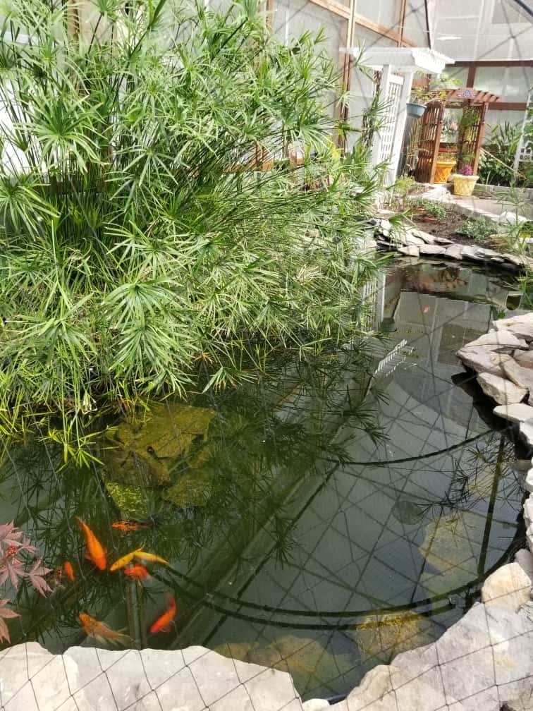 Cypress Gardens Goldfish Pond
